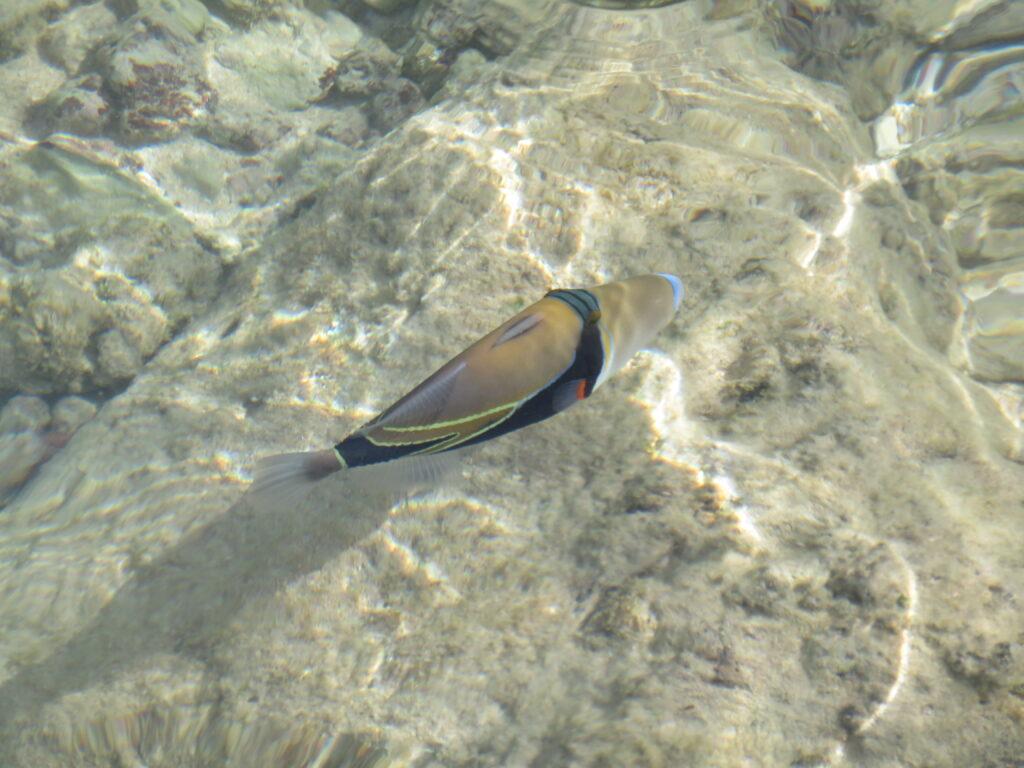 Tropical fish in Waikiki beach